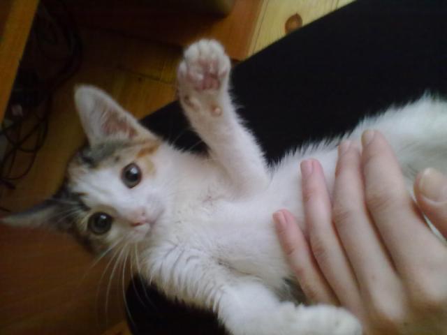 Отдам в дар: Отдам кошечку в хорошие руки