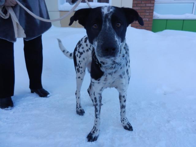 Потерялся/Нашелся: Найдена собака, Томск фото2