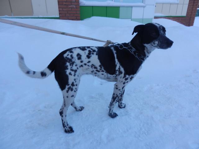 Потерялся/Нашелся: Найдена собака, Томск