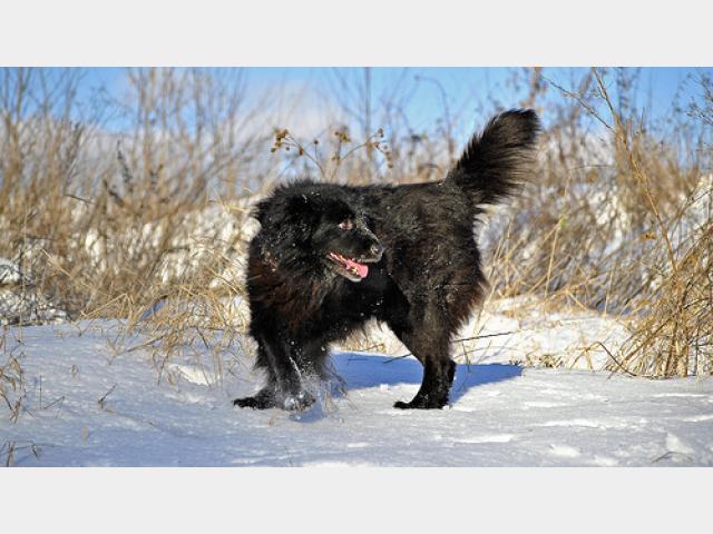 Отдам в дар: Пушистый медвежонок Миша фото2