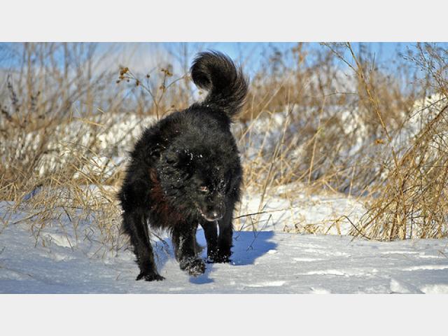 Отдам в дар: Пушистый медвежонок Миша фото3