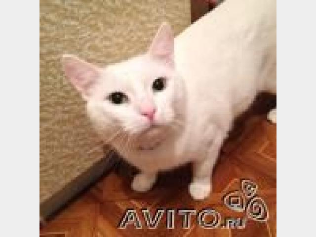 Продаю: Ласковый и воспитанный кот