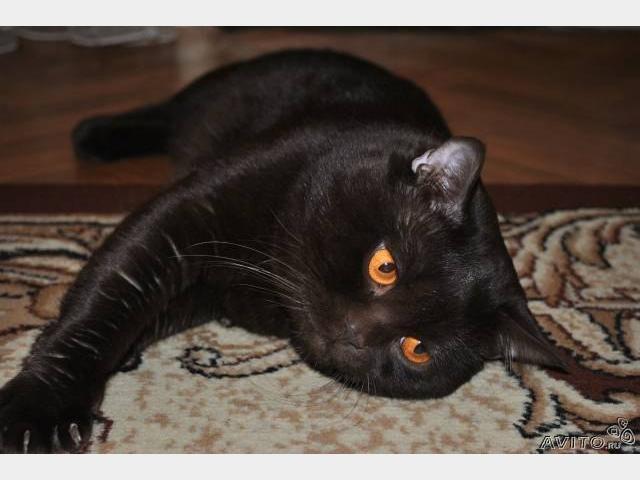 Вязка: Шоколадный кот для вязки