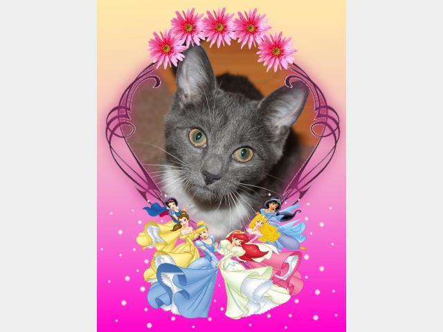 Отдам в дар: Ищет дом серебристая котенка-снегурка