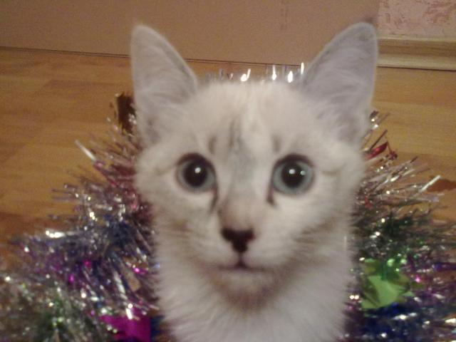 Отдам в дар: Отдам в добрые и хорошие ручки Котёнка фото3