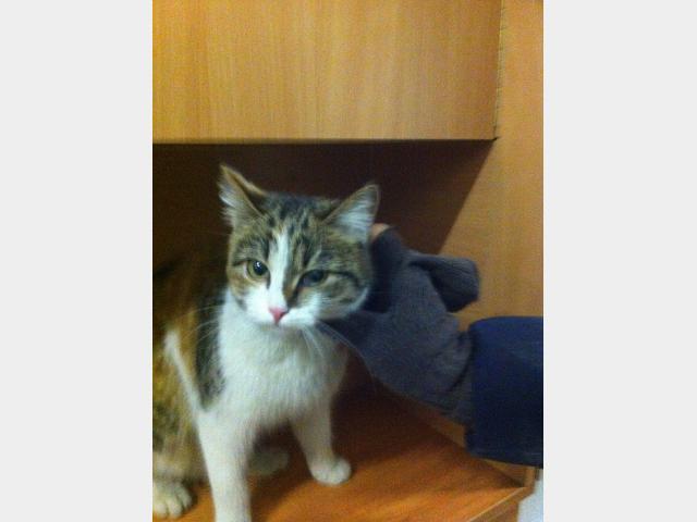 Потерялся/Нашелся: Найдена 3-х цветная кошка на м Братиславская