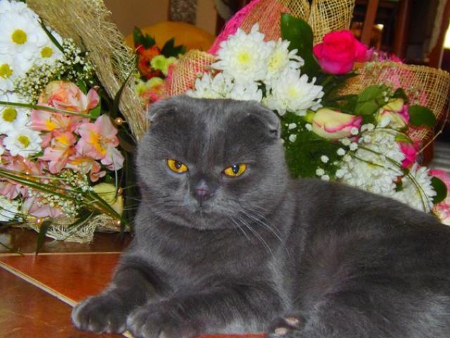 Вязка: Кот ищет кошечку для вязки