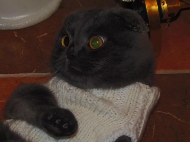 Вязка: Кот ищет кошечку для вязки фото2