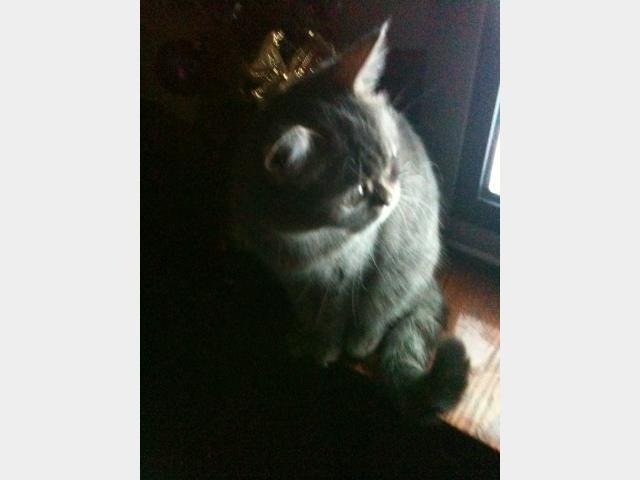 Вязка: Кошка ждет вязку