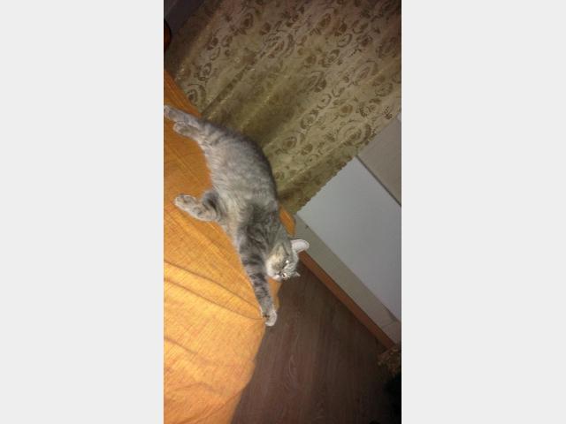 Вязка: Кошка ждет вязку фото3