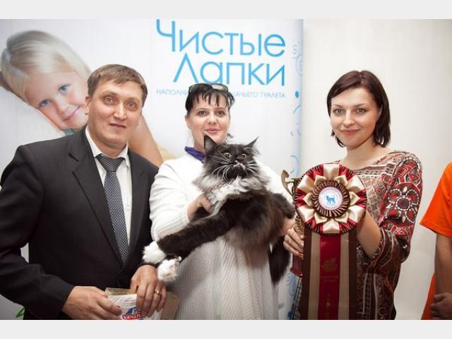 Продаю: тся котята с родословной фото2