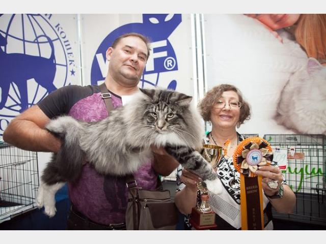 Продаю: тся котята с родословной фото3