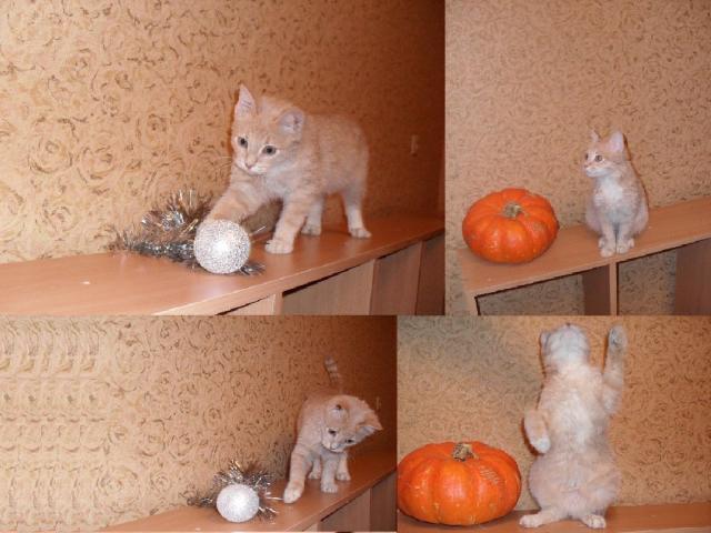 Отдам в дар: Отдам котенка