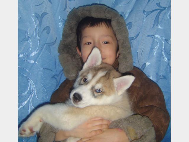 Продаю: Замечательные щенки фото2