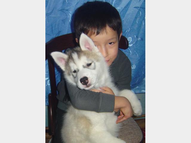 Продаю: Замечательные щенки фото3
