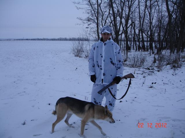 Отдам в дар: Охотничья собака