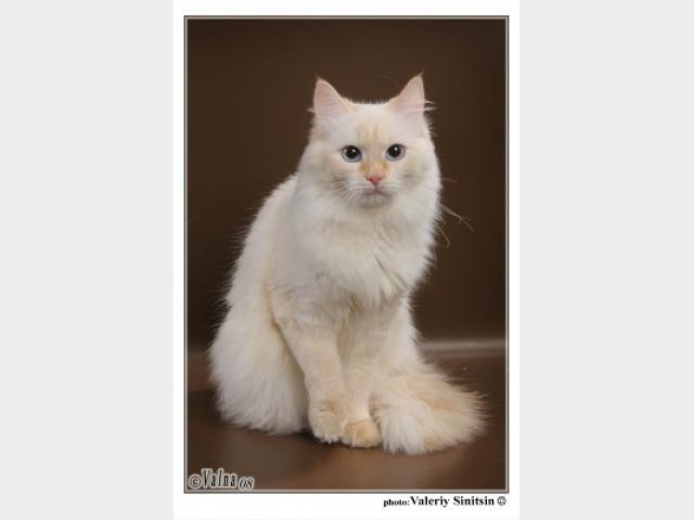Вязка: Котик приглашает к знакомству