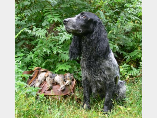 Продаю: Щенки Русского Охотничьего Спаниеля от охотников фото3