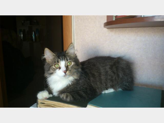 Отдам в дар: Отдам в хорошие руки замечательного котенка