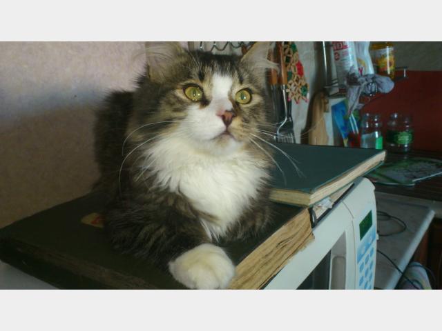 Отдам в дар: Отдам в хорошие руки замечательного котенка фото2