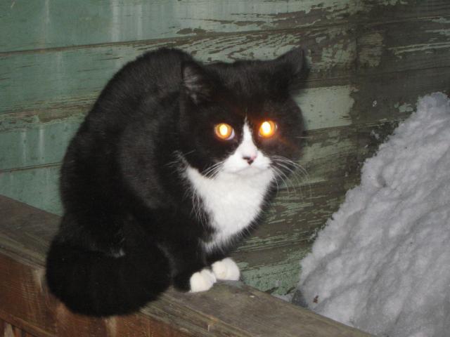 Потерялся/Нашелся: Потерян черно-белый кот, пДеденево фото2