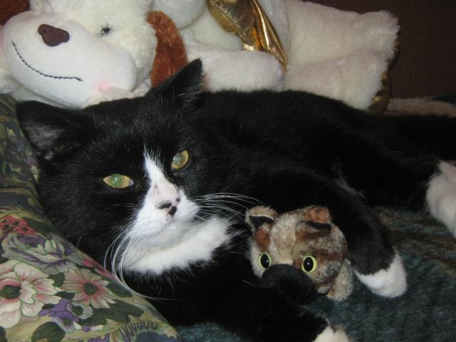 Потерялся/Нашелся: Потерян черно-белый кот, пДеденево фото3