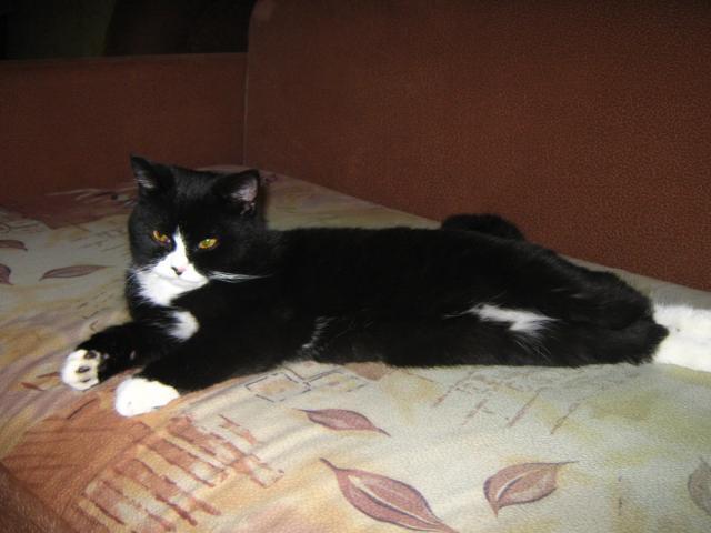 Потерялся/Нашелся: Потерян черно-белый кот, пДеденево