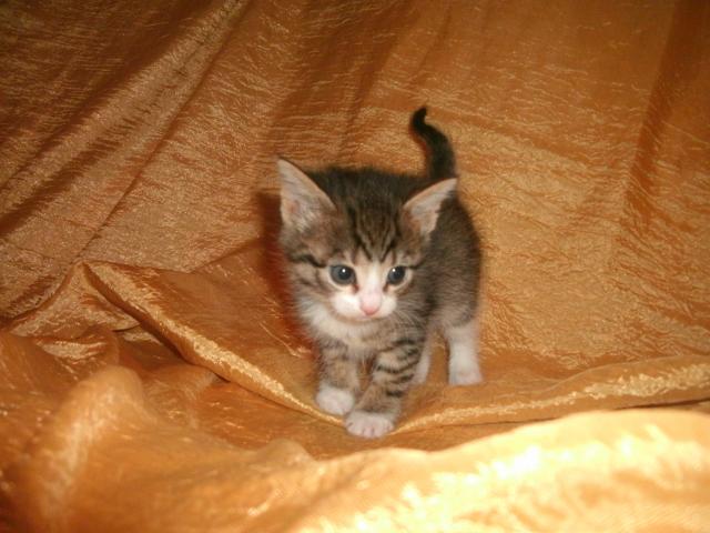 Отдам в дар: Отдам в дар котят