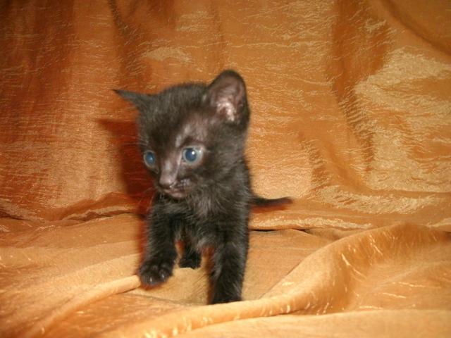 Отдам в дар: Отдам в дар котят фото3