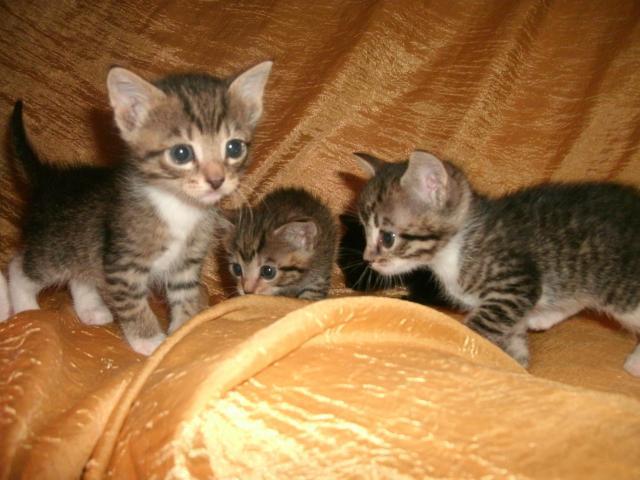 Отдам в дар: Отдам в дар котят фото2