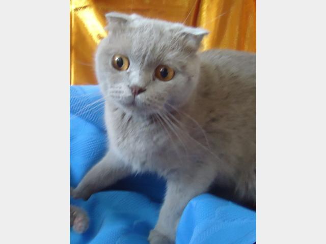 Продаю: РЕЗЕРВ Британских котят