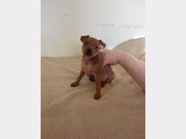 Продаю:  щенков