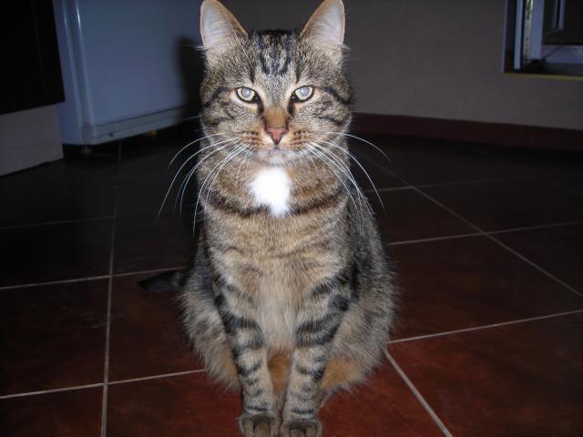 Отдам в дар: Очень добрый кот в дар