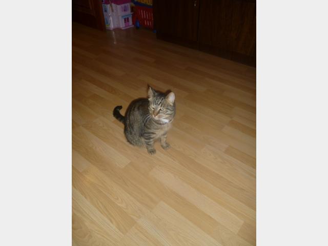 Отдам в дар: Очень добрый кот в дар фото3