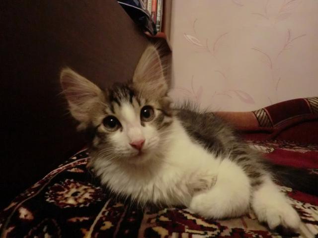 Отдам в дар: Котенок в Добрые руки Бесплатно фото2