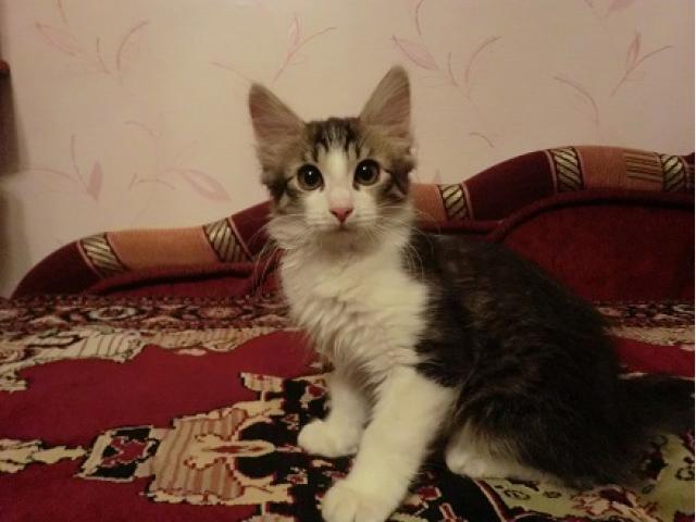 Отдам в дар: Котенок в Добрые руки Бесплатно фото3