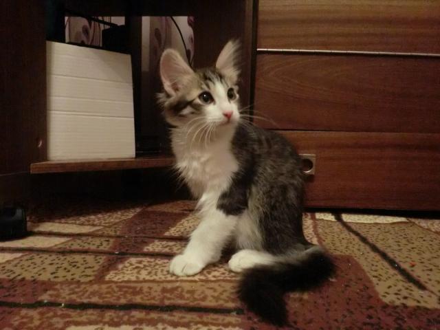 Отдам в дар: Котенок в Добрые руки Бесплатно