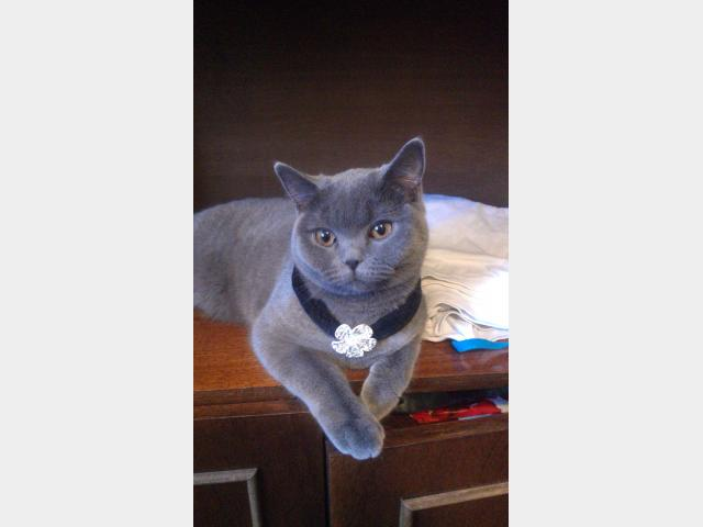 Вязка: Ищем котика для вязки фото2