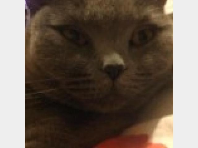 Вязка: Ищем котика для вязки фото3