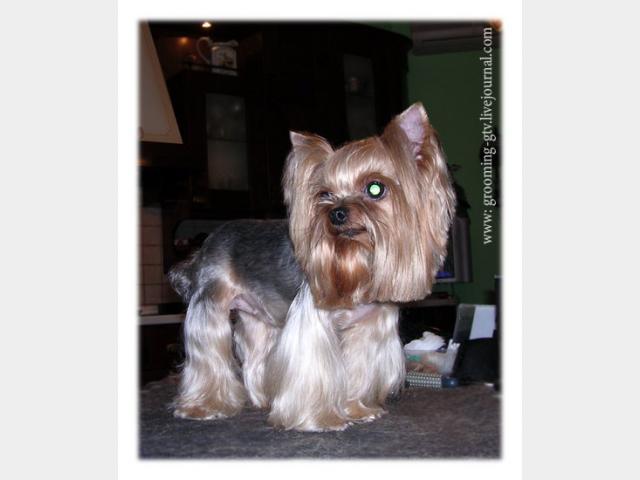 Предлагаю услуги: Стрижка собак с выездом на дом Москва