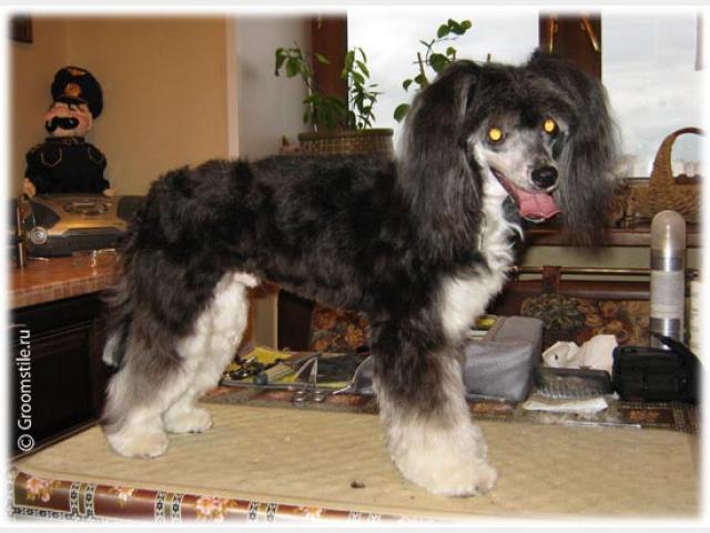 Предлагаю услуги: Стрижка собак с выездом на дом Москва фото2