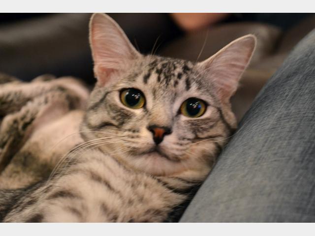Потерялся/Нашелся: Потерялся кот в парковом районе гЕкатеринбург