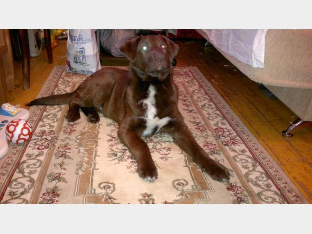 Отдам в дар: Прекрасный щенок в дар фото2