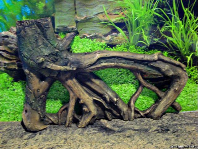 Отдам в дар: Приму в дар большую ветвистую корягу для аквариума