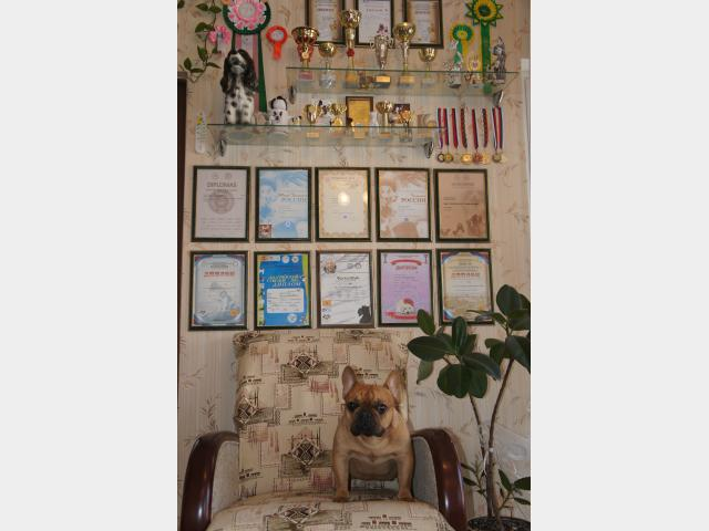 Продаю:  щенков французского бульдога  фото3