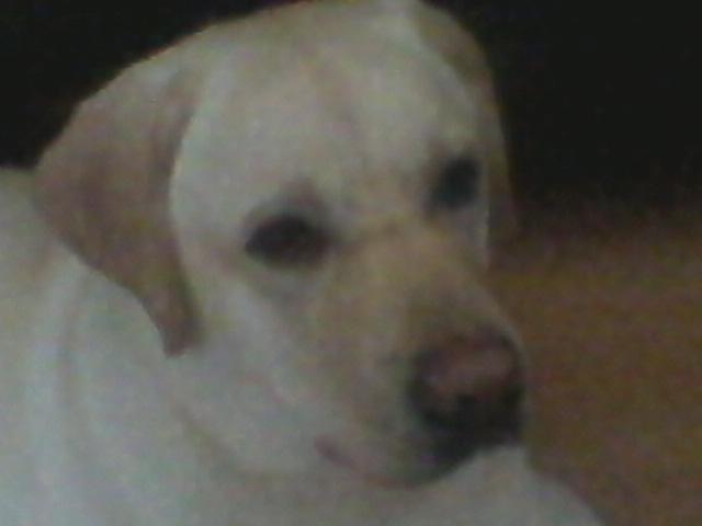 Отдам в дар: Хороший пес для хороших хозяев
