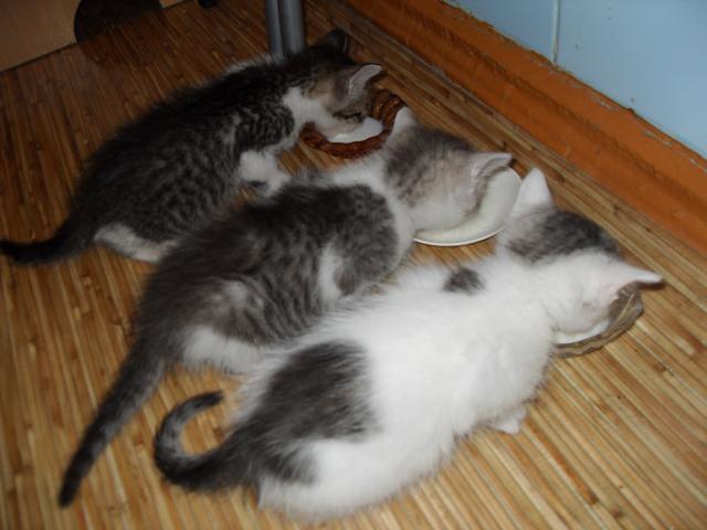 Отдам в дар: Отдам в хорошие руки трех котят