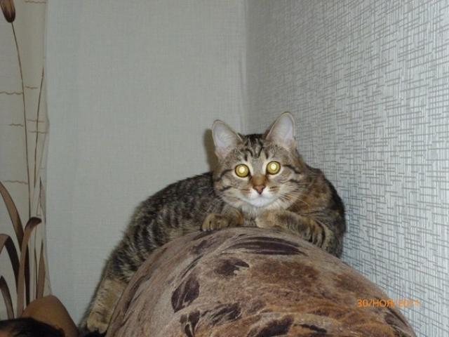 Потерялся/Нашелся: Потерялся любимый котик