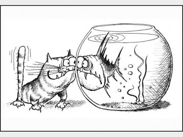 Вязка: Нужен срочно котик для нашей кошечки
