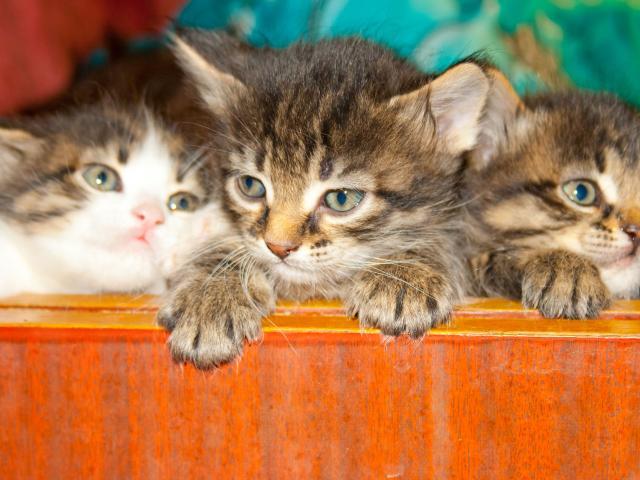 Отдам в дар: Котята в дар от кошки крысоловки фото3